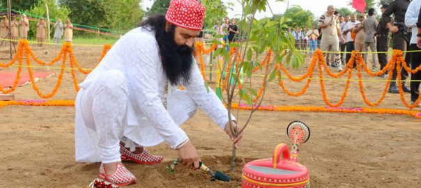 Mega-Tree-Plantation